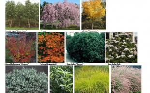 PLANT PALETTE IMAGES-page-0